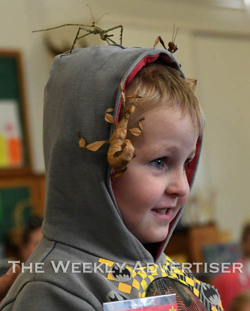 Image - Ryder Thannhauser has his head full of stick insects at Natimuk Road Kindergarten. Xavier Morello from Wildlife Exposure visited the kindergarten.